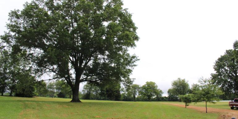 Mature TreesResized